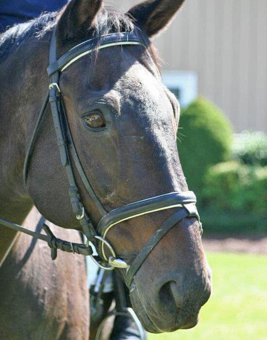 roberson-equestrian-facility-training-5